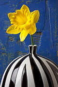 Blue Trumpet Flower Photos - Yellow Daffodil in Striped Vase by Garry Gay