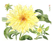 Nancy Pahl - Yellow Dahlia