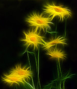 Yellow Daisy Floral  Print by Marjorie Imbeau