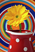 Flowers Yellow Daisy Prints - Yellow daisy in red pitcher Print by Garry Gay