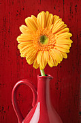 Chrysanthemums  Posters - Yellow daisy in red vase Poster by Garry Gay