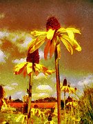 Coneflowers Photos - Yellow Echinacea  Van Gogh style by Chris Thaxter