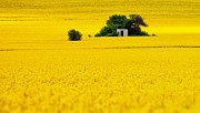Shed Photo Posters - Yellow Poster by Evgeni Dinev
