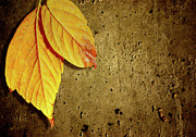 Grungy Prints - Yellow Fall Leafs Print by Carlos Caetano