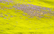 Yellow Fields Print by Guido Montanes Castillo