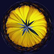 Wildflower Fine Art Posters - Yellow Flower 2 Poster by Skip Nall
