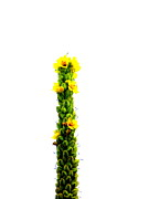 Metro Art Art - Yellow Flower Tower by Beth Akerman