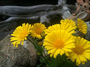 Pretty Flowers Photos - Yellow Flowers by Shawna Erback by Shawna Erback