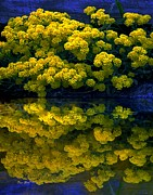 Reflection In Water Digital Art Posters - Yellow Flowers Reflected Poster by Dale   Ford