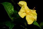 Christopher Holmes - Yellow Four O-Clock