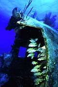 Turks And Caicos Islands Photos - Yellow Goatfish In An Artificial Reef by Beverly Factor