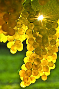 Grape Photo Metal Prints - Yellow grapes Metal Print by Elena Elisseeva