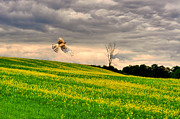 Farm Scenes Photos - Yellow Hawk by Emily Stauring