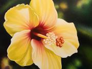 Art Medium Paintings - Yellow Hibiscus by Barbara Eberhart - Printscapes