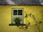 Yellow House County Clare Ireland Print by Teresa Mucha
