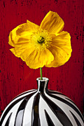 Yellow Flowers Posters - Yellow Iceland Poppy Poster by Garry Gay