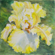 Carolyn Bell - Yellow Iris