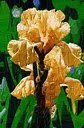 Diane Berry Paintings - Yellow Iris by Diane E Berry