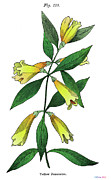 Stiff Metal Prints - Yellow Jessamine Metal Print by Ziva