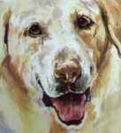 Retriever Pastels Posters - Yellow Lab Poster by Debbie Anderson