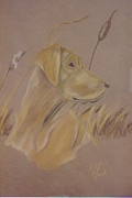 Lab Pastels - Yellow Lab by Margo Clark
