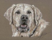 Retriever Pastels Posters - Yellow Labrador Retriever Poster by Terry Kirkland Cook