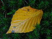 Autumn Leaf Posters - Yellow Leaf Poster by Juergen Roth
