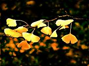 Fall Colors Digital Art Originals - Yellow Leaves by Marius Sipa