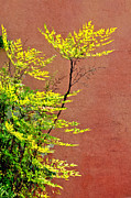Fall Digital Art Originals - Yellow Leaves Red Wall by James Steele
