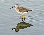 Yellow Leg Reflection Print by Thomas Photography  Thomas