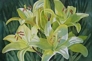 Lillies Painting Prints - Yellow LIlies with Buds Print by Sharon Freeman