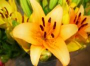 Lily Digital Art Originals - Yellow Lily by Michael Thomas