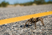 Rural Road Posters - Yellow Line Spider 2 Poster by Wayne Stadler