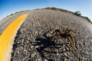 Yellow Line Prints - Yellow Line Spider Print by Wayne Stadler