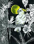 Cockatoo Drawings Framed Prints - Yellow Moon.  Framed Print by Richard Brooks