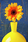 Chrysanthemums  Posters - Yellow mum in yellow vase Poster by Garry Gay