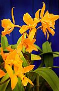 Stephen Mack Metal Prints - yellow Orange Orchids Metal Print by Stephen Mack