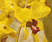 Orchids Art - Yellow Orchid by MiMi  Photography
