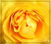 Northwest Art Prints - Yellow Petals Print by Cathie Tyler