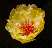 Plant Glass Art - Yellow Portulaca by Mitch Shindelbower