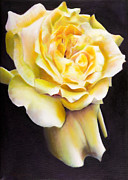 Naturalistic Framed Prints - Yellow Rose 2 Framed Print by Tzvi Abraham