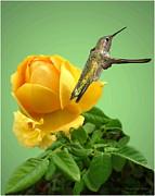 Joyce Dickens - Yellow Rose and Hummingbird 2