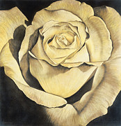 Floral Prints Drawings Posters - Yellow Rose Poster by Lawrence Supino