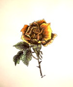 Texas Drawings - Yellow Rose by Nancy Rucker