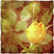 City Photography Digital Art - Yellow Rose of Love by Cathie Tyler