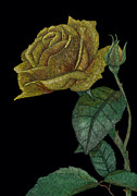 Scratchboard Paintings - Yellow Rose of Texas by Lynn Kibbe