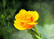 Colored Pencil Framed Prints - Yellow Rose Framed Print by Paul Petro