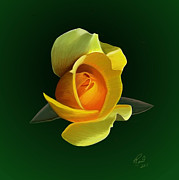 Rand Herron - Yellow Rose