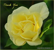 Florida Flowers Prints - Yellow Rose Thank You Print by Sherry Gombert
