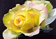Naturalistic Framed Prints - Yellow Rose Framed Print by Tzvi Abraham